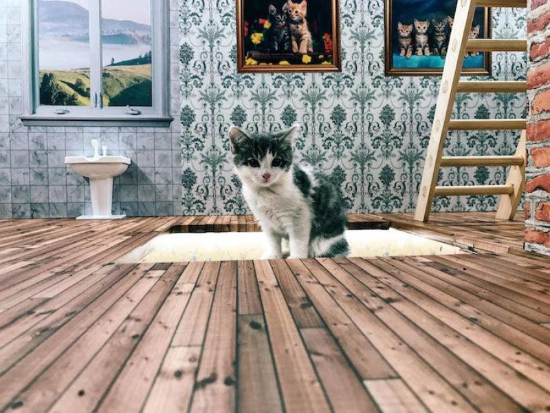 Keeping up with the Kattarshians: Live stream of kittens on Icelandic TV